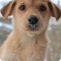 Adopt A Pet :: Sika - Danbury, CT