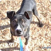 Adopt A Pet :: Rudy - Stillwater, OK