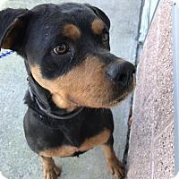 Adopt A Pet :: Thelma - Sayville, NY