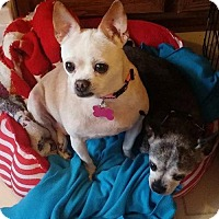 Adopt A Pet :: Missy & Bailey - Fairfield, OH