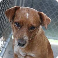 Adopt A Pet :: Isabella - Rockville, MD