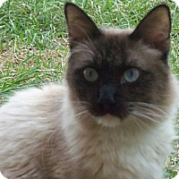 Adopt A Pet :: Cristoff - Ennis, TX