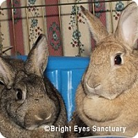 Adopt A Pet :: Sunny&Huey - Rockville, MD