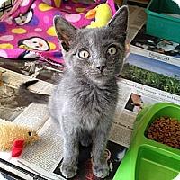 Adopt A Pet :: Mark - Island Park, NY