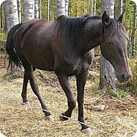 Adopt A Pet :: Neeka - Sundre, AB