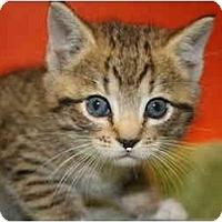 Adopt A Pet :: LINDA - SILVER SPRING, MD