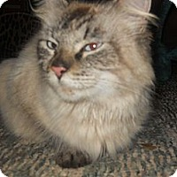 Adopt A Pet :: Sasha - Conyers, GA