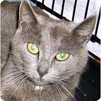 Adopt A Pet :: Mollie - Plainville, MA