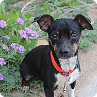Adopt A Pet :: Nick (Nic) - Fountain, CO