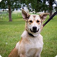 Adopt A Pet :: Odin - Saskatoon, SK