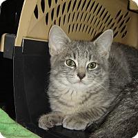 Adopt A Pet :: Gee - Mundelein, IL