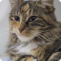 Adopt A Pet :: Cupid - Merrifield, VA