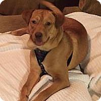 Adopt A Pet :: Shyanne - Odenville, AL