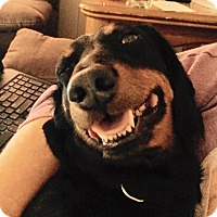 Adopt A Pet :: Grand Slam Sam - Marcellus, MI