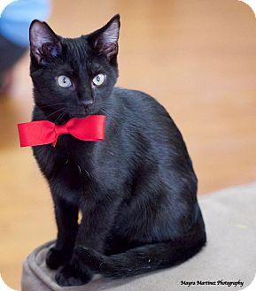 Cats For Adoption In Marietta Ga