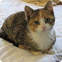Adopt A Pet :: Kailey - Edmonton, AB