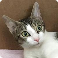 Adopt A Pet :: Flora - Herndon, VA