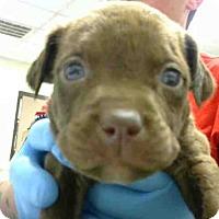 Adopt A Pet :: A272916 - Conroe, TX