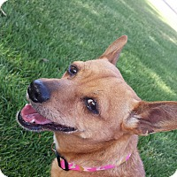 Adopt A Pet :: Olive - Apache Junction, AZ