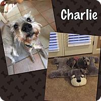 Adopt A Pet :: Charlie - Millersville, MD