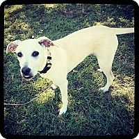 Adopt A Pet :: Sable - Grand Bay, AL