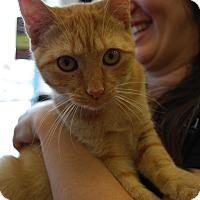 Adopt A Pet :: Runyun (LV) - Exton, PA
