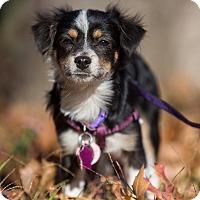 Adopt A Pet :: Peanut: Adoption Pending - Verona, NJ