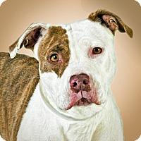 Adopt A Pet :: Delilah - Prescott, AZ