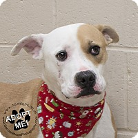Adopt A Pet :: Pacino - Troy, OH