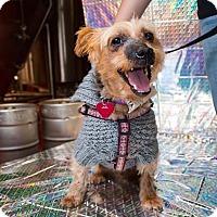 Adopt A Pet :: SLICK - Toronto, ON