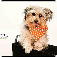 Adopt A Pet :: Fisher - Richardson, TX