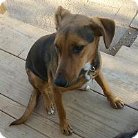 Adopt A Pet :: Jaime/Max - Tucson, AZ