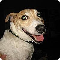 Adopt A Pet :: Jack - Thomasville, NC