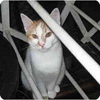Adopt A Pet :: Fran - Clay, NY
