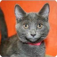 Adopt A Pet :: MAVIS - SILVER SPRING, MD