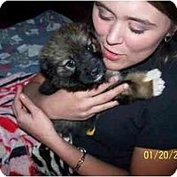 Adopt A Pet :: Boots - Honaker, VA