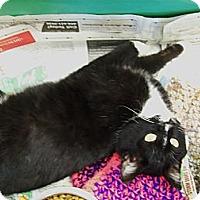 Adopt A Pet :: Benjamin - Walnut, IA