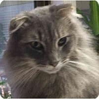 Adopt A Pet :: Seamus - Davis, CA