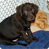 Adopt A Pet :: Duncan - Minneola, FL
