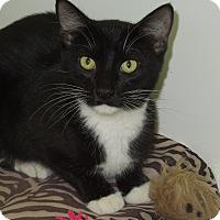 Adopt A Pet :: Gale - Medina, OH