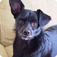 Adopt A Pet :: Cabo - West Los Angeles, CA