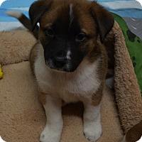 Adopt A Pet :: Bernadette - Burleson, TX