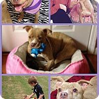 Adopt A Pet :: Alice - Donaldsonville, LA
