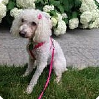 Adopt A Pet :: Mulan - Mount Gretna, PA