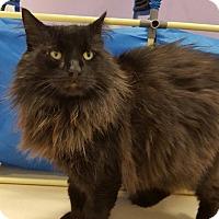 Adopt A Pet :: Reeses' - Westbury, NY