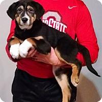 Adopt A Pet :: Zeus - New Philadelphia, OH