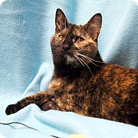 Adopt A Pet :: Rumer - Colorado Springs, CO
