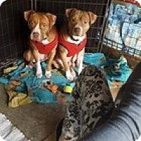 Adopt A Pet :: Jake - Sacramento, CA