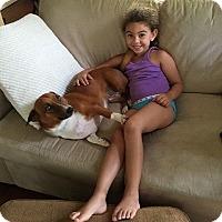 Adopt A Pet :: Prince - Windermere, FL