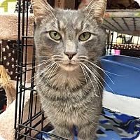 Adopt A Pet :: Boo - Blasdell, NY